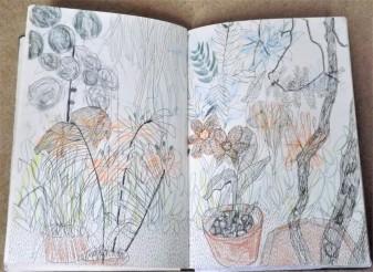 Chelsea Physic Garden, coloured pencil, pencil, pen, A3